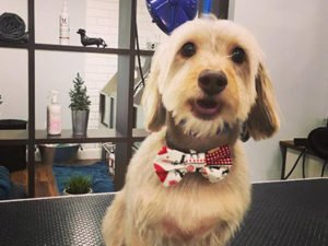 Dog Grooming Surrey Client at Short Bark and Sides 1