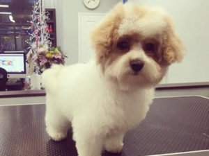 Dog Grooming Client at Short Bark and Sides Surrey 16
