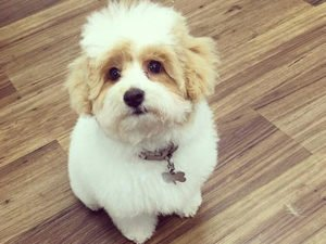 Dog Grooming Client at Short Bark and Sides Surrey 19