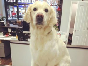 Dog Grooming Client at Short Bark and Sides Surrey 7